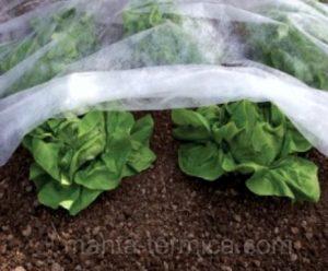 manta-térmica-en-cultivo
