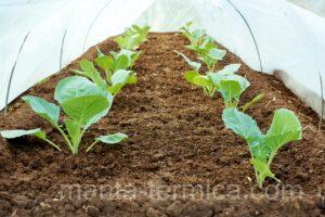 manta térmica protección de cultivos