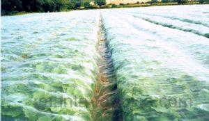 proteccion-de-cultivo-de-hortalizas