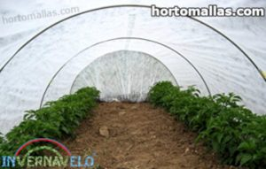 plantas en invernadero hecho con manta térmica