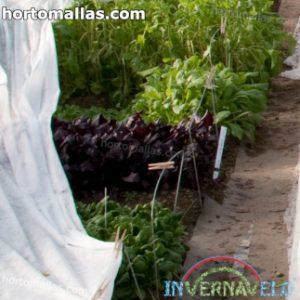 quitando manta térmica de los cultivos
