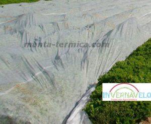 manta termica en cultivo