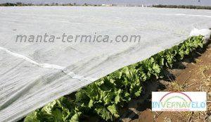 tela térmica en cultivos de hortalizas