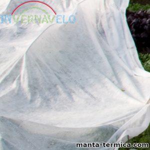 Plantas cubiertas por manta térmica agrícola