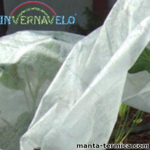 Planta cubierta por manta térmica invernavelo